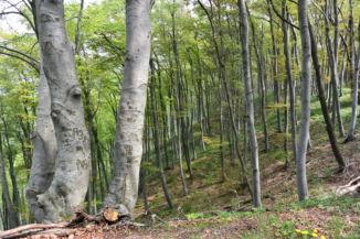 erdő a Fekete-kő felé