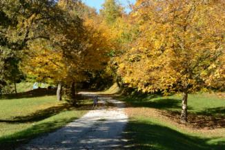 bicikli az őszi fák között
