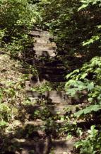 az Ördög-orom tanösvény egyik benőtt lépcsője