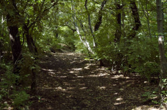 ösvény a Rupp-hegy oldalában