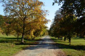 a Bélapi-pihenőtől Balatongyörök felé vezető út