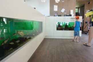 aquariums at the entrance of the Bodorka Balaton Aquarium