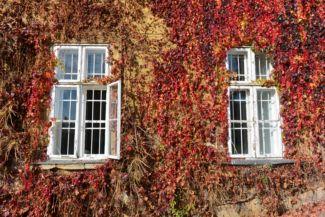 őszi színek a Budai Arborétumban