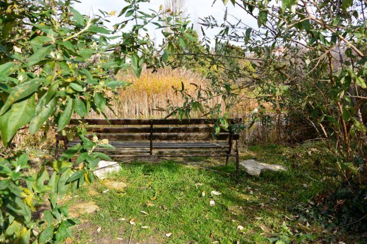 pihenőhely a tó mellett a Budai Arborétumban