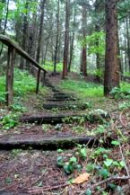 lépcső a fenyvesben a Budafai Arborétumban
