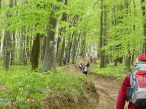 Joó Anna Mária, Gerecse 50: Tavasz (a Cartographia Kupa 2015 fotópályázatából)