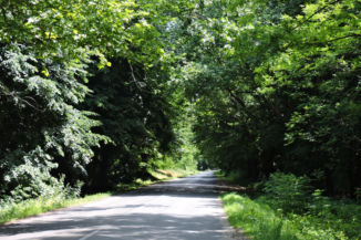 Látrány után rövid erdei útszakasz következik