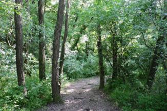 erdei ösvény a Cinege-forrás közelében