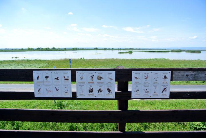 kilátás a Borsod-dűlő madármegfigyelő kilátóból