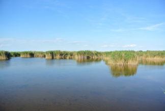 mocsaras terület a tópartra vezető út oldalán