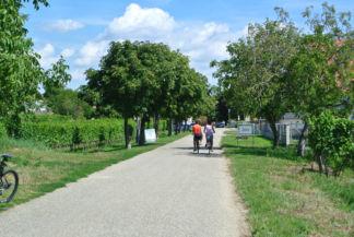 bicikliút a szőlősorok mentén