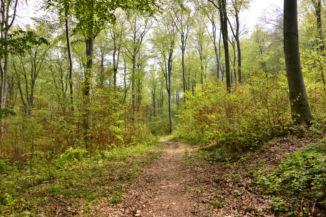 erdei út a Két-Bükkfa-nyereg közelében