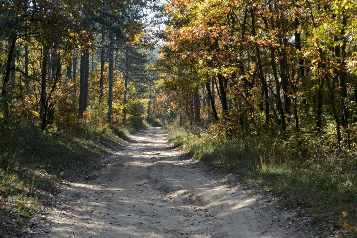 enyhén emelkedő völgyben kapaszkodunk, utunkat erdeifenyők és tölgyek szegélyezik