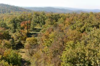 az alant elterülő erdő a Padkűi-kilátóból nézve