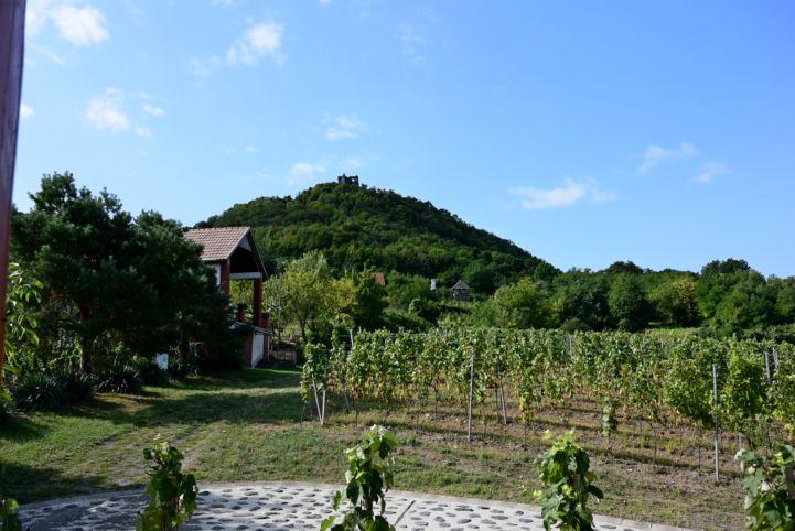 kilátás a Somló hegyi várromra a Várkapitány pincészet teraszáról