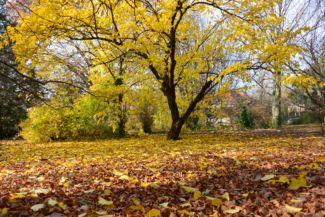 ősz a Budai Arborétumban