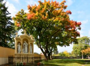 őszi színekbe öltözött fa a Szentháromság-templom kertjében
