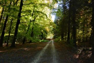útban a Padkűi-kilátó felé a Büdöskúti Arborétumon át
