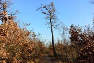 őszi erdő a Nagy-Hárs-hegyen