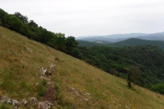 hegyoldalban futó ösvény a Bükkben
