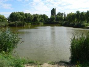 Halas-tó
