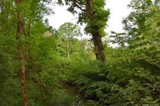 Erdőrészlet Lentiszombathely környékén