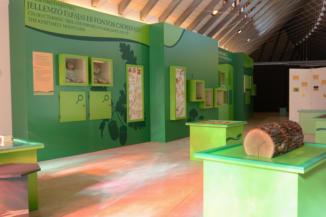 A Keszthelyi-hegység jellegzetes fa- és cserjefajtáit bemutató részleg a Természet Háza Látogatóközpontban