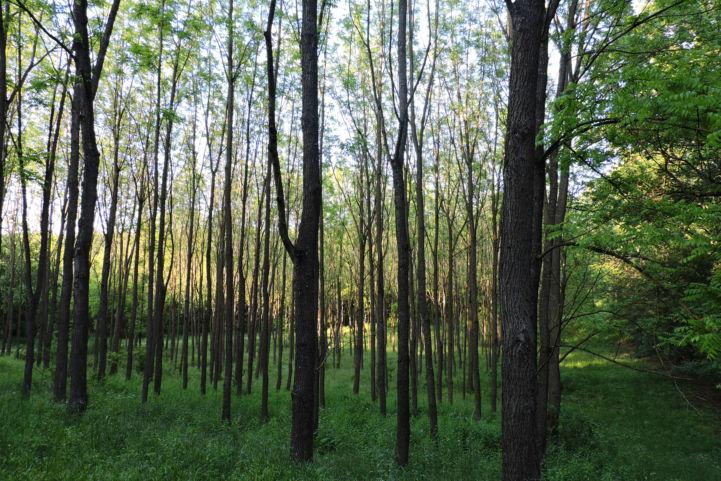Jabai-erdő
