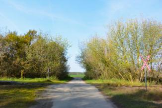 az út keresztezi a kisvasút sínjeit Pálmajornál