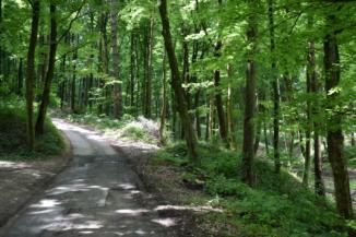 erdei út Zajk környékén