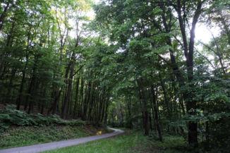 erdei ösvény Jabapuszta után
