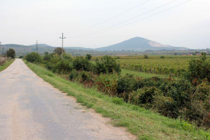 Vokány és Kisharsány közötti út, háttérben a Villányi-hegység