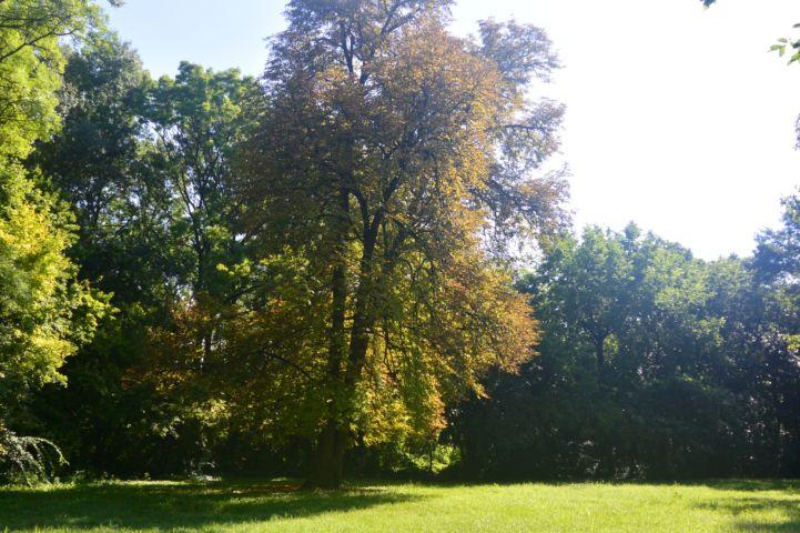 Kossuth park
