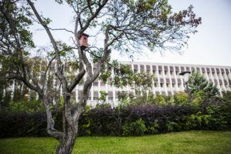 a Szent István Egyetem Somogyi Kollégiuma a Budai Arborétumból nézve