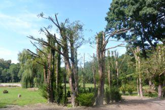 Karapancsai Kastély parkja