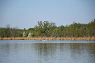 Palini-tó