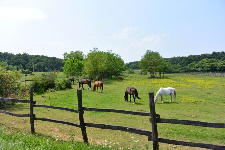 Káli ranch