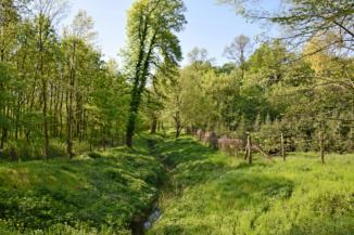 erdei patak és Zrínyi fája a Zsigárd erdei lakhoz közel