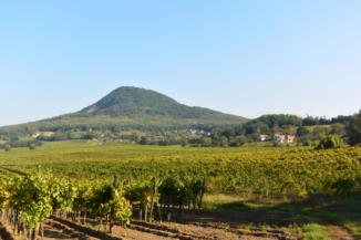 a Hármas-hegy szőlői és a Gulács