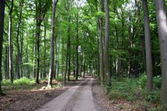piros jelzésű kiépített erdei út Budafa és Bázakerettye között