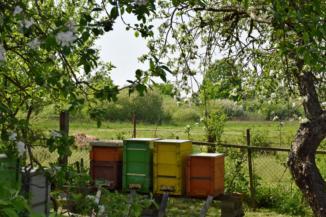 kaptárok és virágzó almafák az iklódbördőcei gyógynövény- és méztermelőnél