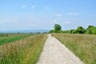 biciklis és vadludak a tanösvény útvonalán