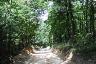 utunk vége poros löszös, poros szakaszon vezet, az összeboruló fák árnyékában