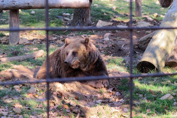a medvekifutó egyik lakója