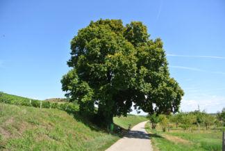 a fa tövében rejtőzik a kis oltár