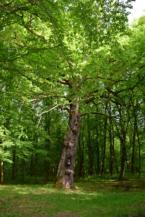 képesfa Lentiszombathelyen
