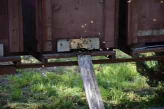 méhkaptár az iklódbördőcei gyógynövény- és méztermelőnél