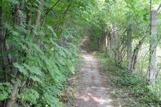 útban a Kőérberki út felé