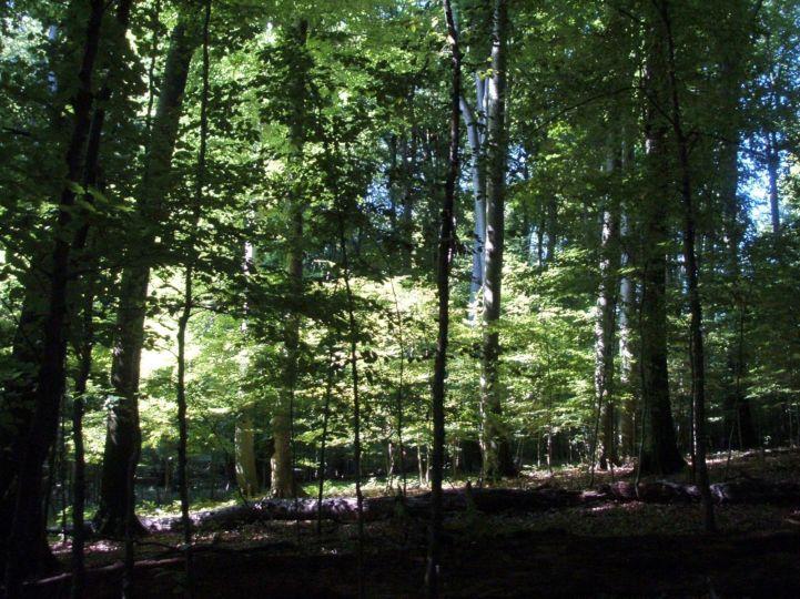 Vétyem erdőrezervátum