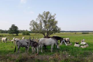 állatok az iklódbördőcei ökotanyán